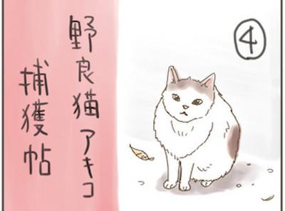 Akiko4